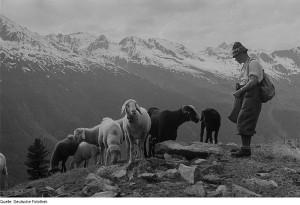 Hans Haid ist Volkskundler von internationalem Format: Seine Arbeit, dokumentiert in einer Vielzahl von Publikationen und in Vereinigungen wie pro Vita Alpina, kreist um das Leben der Menschen in der alpinen Gebirgslandschaft
