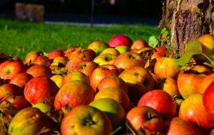 Tiroler Lebensmittel: Ich mag es, wenn der saftige Apfel eine kleine Macke hat