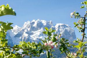 Beim Tiroler Schnaps weiß man noch, woher das Obst ist! (Bild: Kuenz-Naturbrennerei)